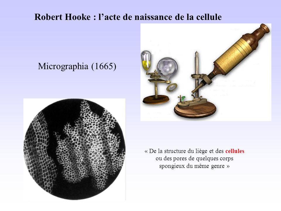 Robert Hooke : lacte de naissance de la cellule Micrographia (1665) « De la structure du liège et des cellules ou des pores de quelques corps spongieux du même genre »