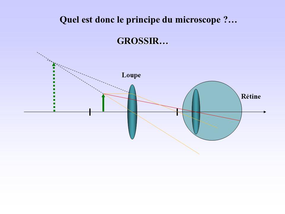 Rétine Quel est donc le principe du microscope ?… LoupeGROSSIR…