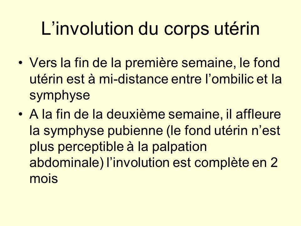 Linvolution du corps utérin Vers la fin de la première semaine, le fond utérin est à mi-distance entre lombilic et la symphyse A la fin de la deuxième