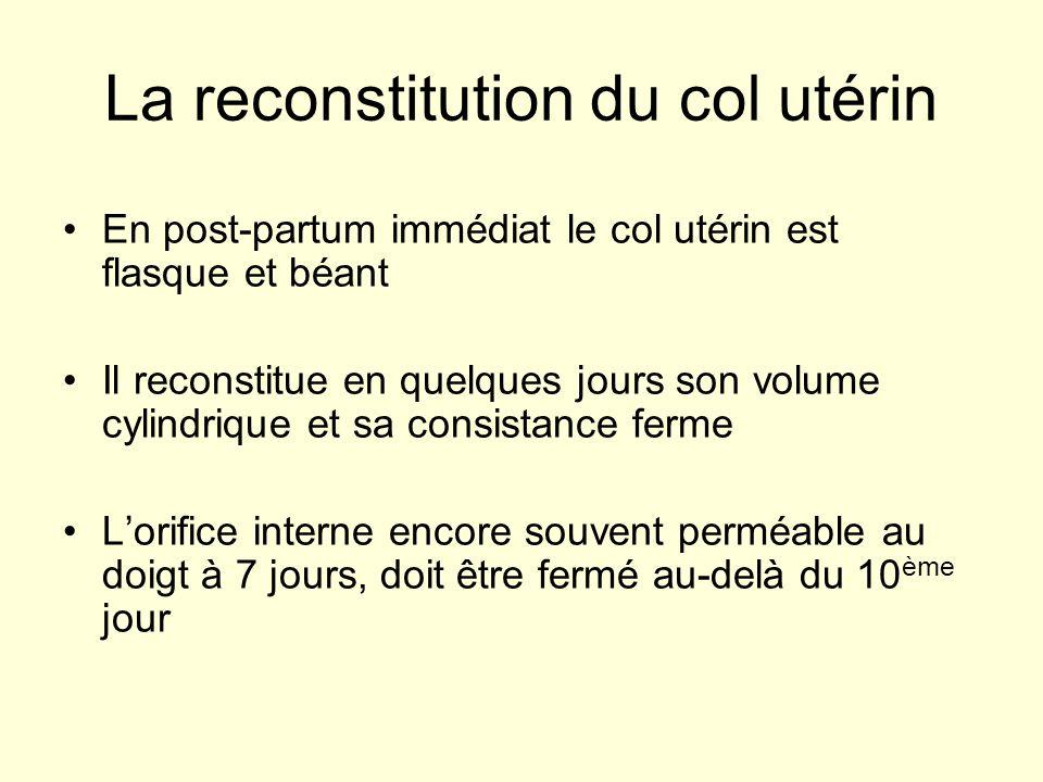 La reconstitution du col utérin En post-partum immédiat le col utérin est flasque et béant Il reconstitue en quelques jours son volume cylindrique et