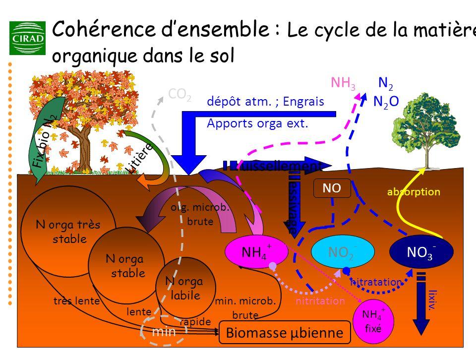 NH 4 + NO 2 - NO 3 - minéralisation N orga très stable N orga stable N orga labile très lente lente rapide Biomasse µbienne Litière min. microb. brute
