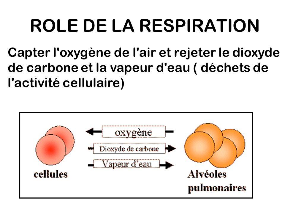 Capter l'oxygène de l'air et rejeter le dioxyde de carbone et la vapeur d'eau ( déchets de l'activité cellulaire) ROLE DE LA RESPIRATION