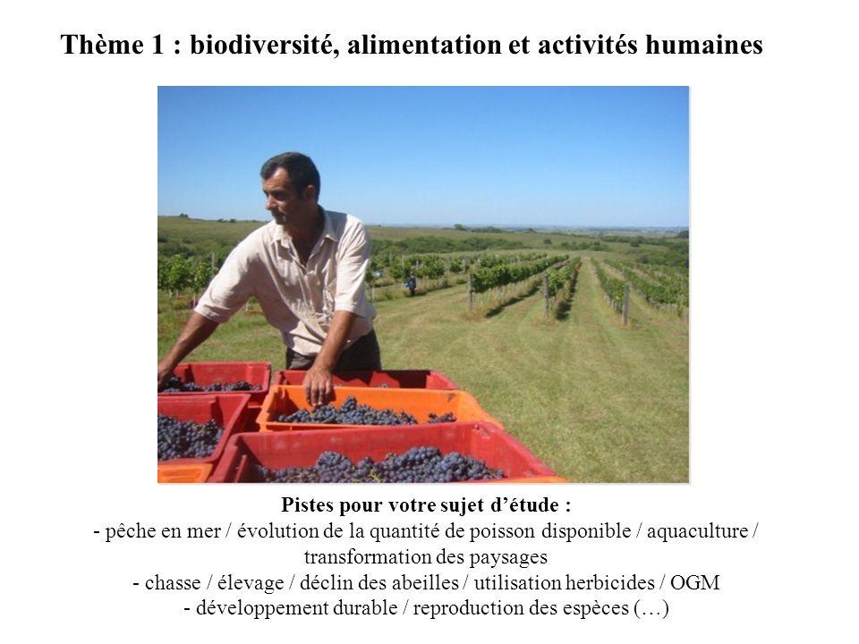 Thème 1 : biodiversité, alimentation et activités humaines Pistes pour votre sujet détude : - pêche en mer / évolution de la quantité de poisson dispo