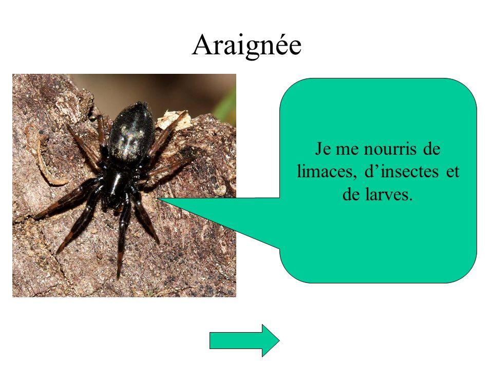 Araignée Je me nourris de limaces, dinsectes et de larves.