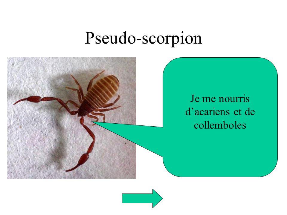 Pseudo-scorpion Je me nourris dacariens et de collemboles