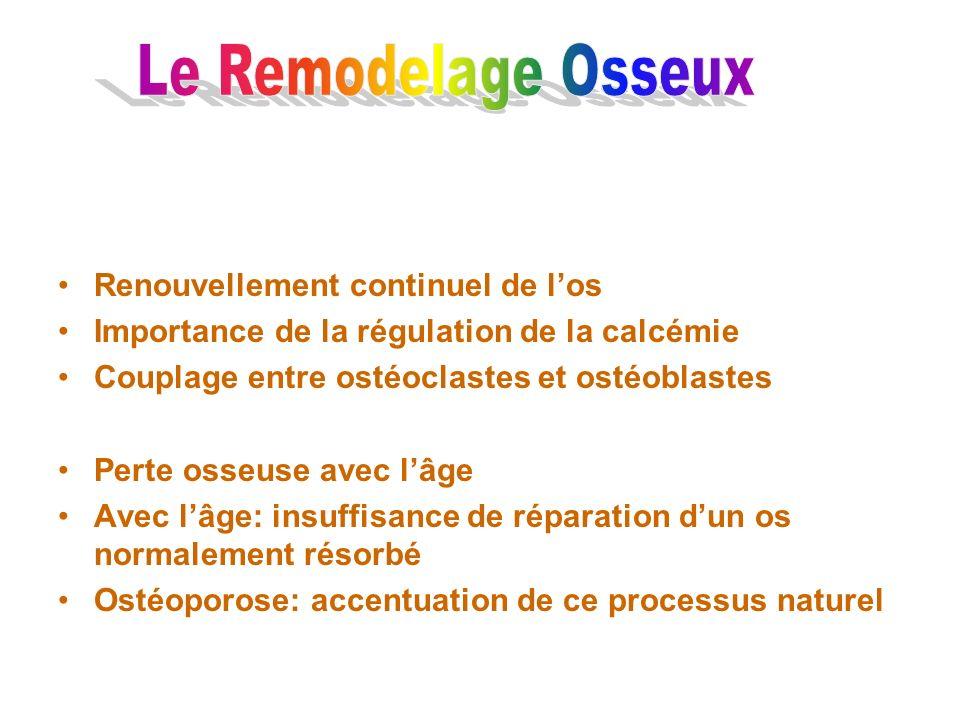 Renouvellement continuel de los Importance de la régulation de la calcémie Couplage entre ostéoclastes et ostéoblastes Perte osseuse avec lâge Avec lâ