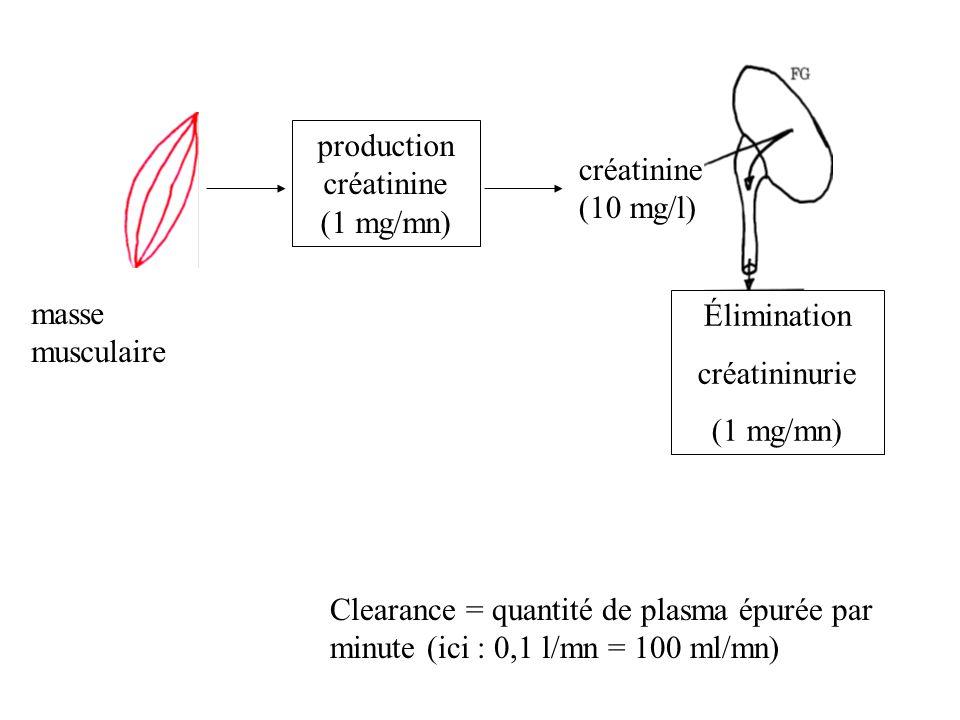 masse musculaire production créatinine (1 mg/mn) créatinine (10 mg/l) Élimination créatininurie (1 mg/mn) Clearance = quantité de plasma épurée par mi