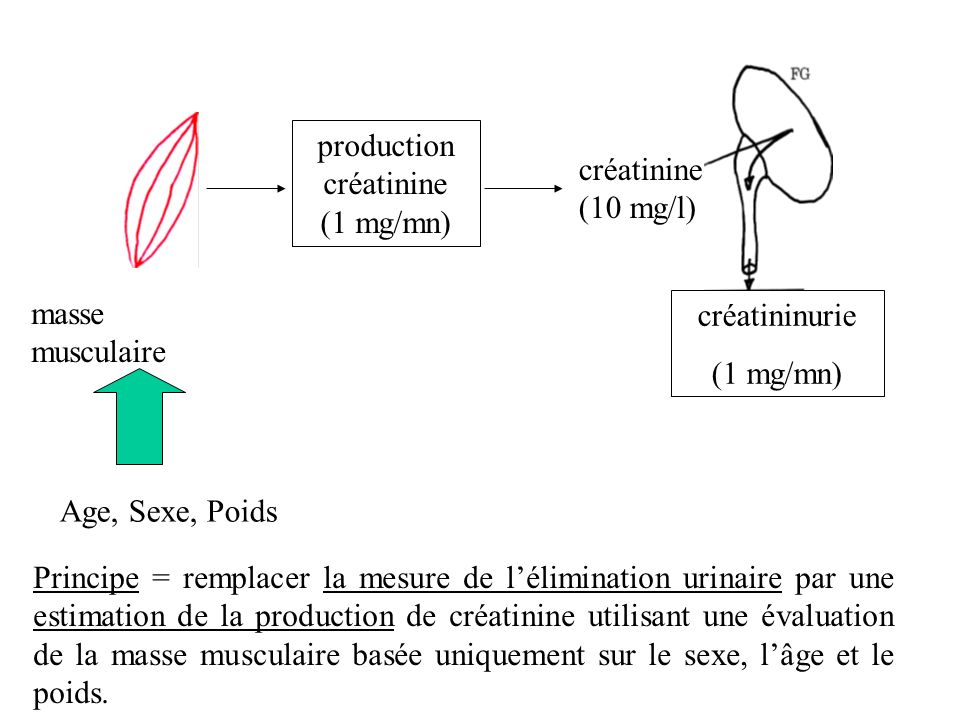 masse musculaire Age, Sexe, Poids production créatinine (1 mg/mn) créatinine (10 mg/l) créatininurie (1 mg/mn) Principe = remplacer la mesure de lélim