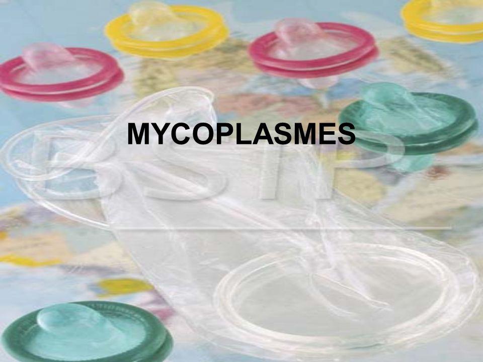 MYCOPLASMES