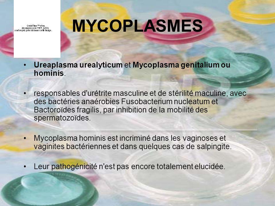 MYCOPLASMES Ureaplasma urealyticum et Mycoplasma genitalium ou hominis. responsables d'urétrite masculine et de stérilité maculine, avec des bactéries