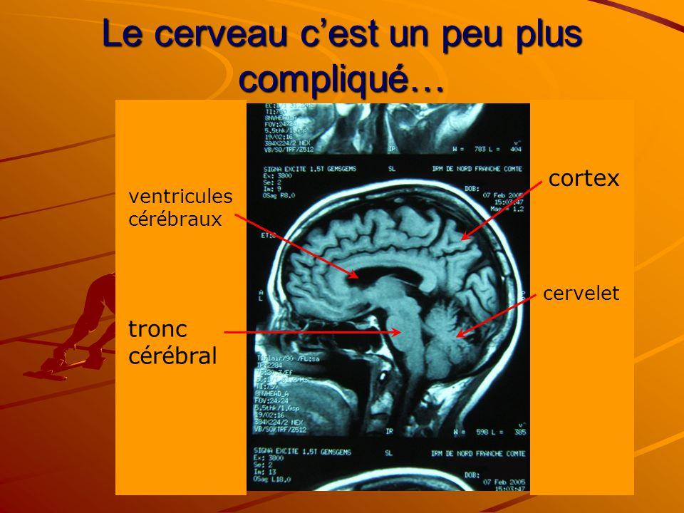 Le cerveau cest un peu plus compliqué… tronc c é r é bral cervelet ventricules c é r é braux cortex