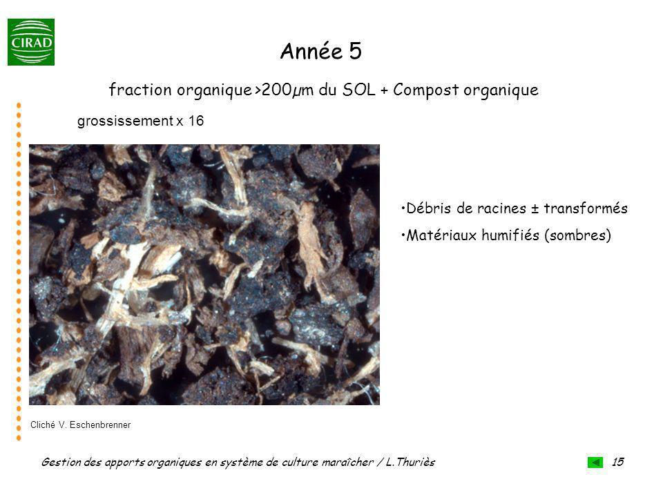 Gestion des apports organiques en système de culture maraîcher / L.Thuriès 15 grossissement x 16 fraction organique >200µm du SOL + Compost organique Année 5 Débris de racines ± transformés Matériaux humifiés (sombres) Cliché V.