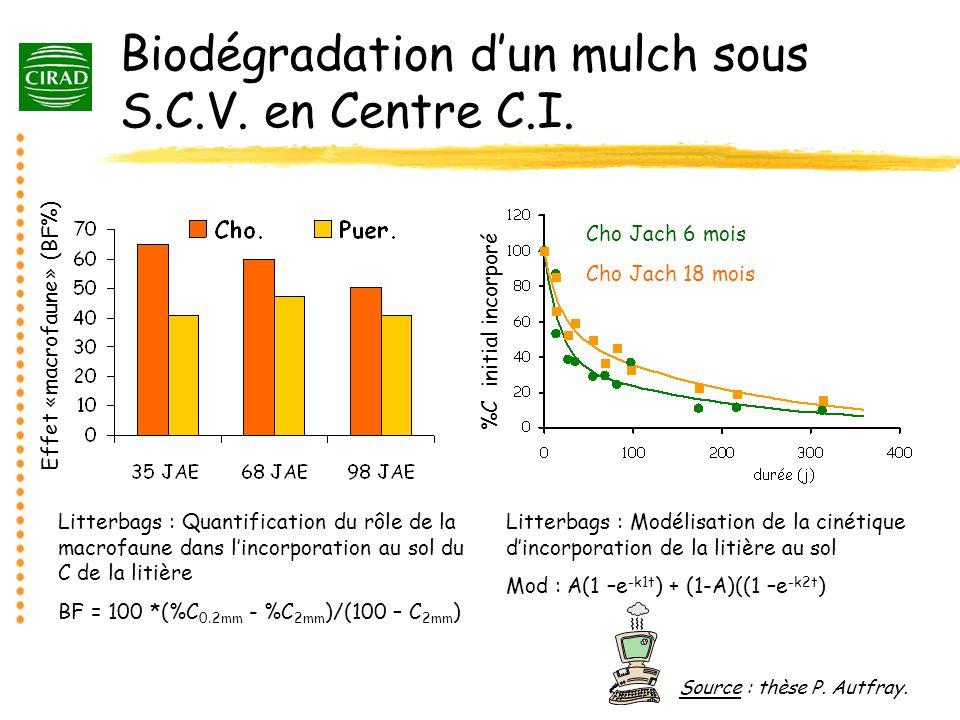 Biodégradation dun mulch sous S.C.V. en Centre C.I. Effet «macrofaune» (BF%) Litterbags : Quantification du rôle de la macrofaune dans lincorporation