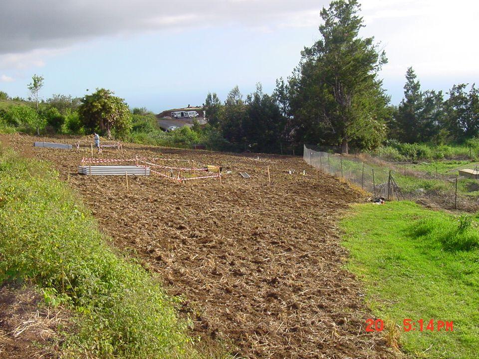 : Site de mesure Suivi des flux deau et de nitrate dans le sol Culture: maïs en été avoine en hiver