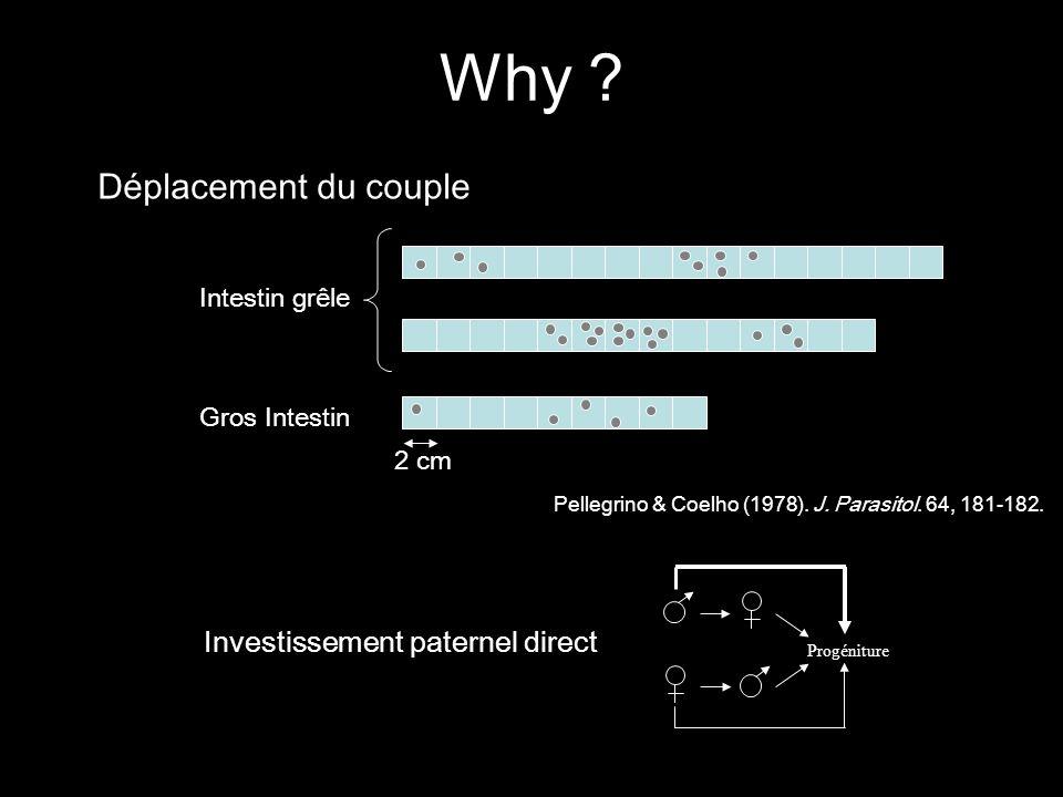 Déplacement du couple 2 cm Pellegrino & Coelho (1978). J. Parasitol. 64, 181-182. Intestin grêle Gros Intestin Progéniture Investissement paternel dir