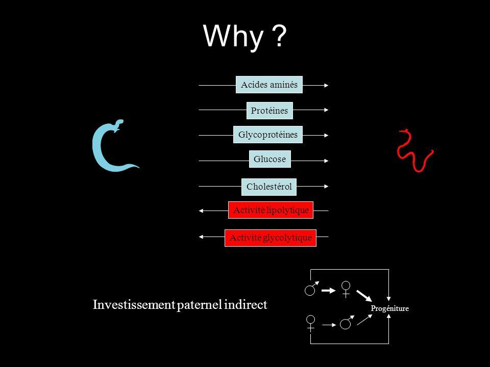 Activité lipolytique Activité glycolytique Protéines Glycoprotéines Glucose Cholestérol Acides aminés Progéniture Investissement paternel indirect Why