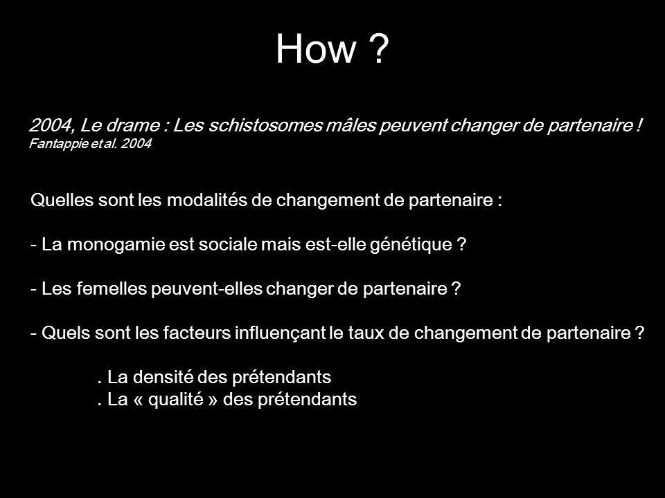 2004, Le drame : Les schistosomes mâles peuvent changer de partenaire ! Fantappie et al. 2004 Quelles sont les modalités de changement de partenaire :