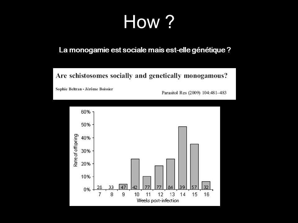 How ? La monogamie est sociale mais est-elle génétique ?