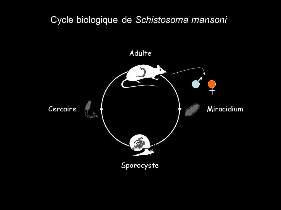 Activité lipolytique Activité glycolytique Protéines Glycoprotéines Glucose Cholestérol Acides aminés Progéniture Investissement paternel indirect Why ?