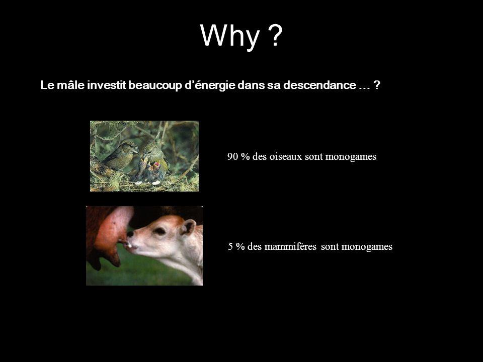 90 % des oiseaux sont monogames 5 % des mammifères sont monogames Le mâle investit beaucoup dénergie dans sa descendance … ? Why ?