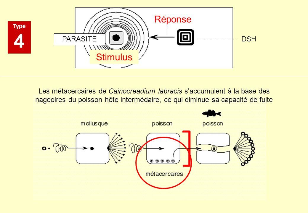 Type 4 Stimulus Réponse PARASITE DSH Les métacercaires de Cainocreadium labracis s'accumulent à la base des nageoires du poisson hôte intermédaire, ce