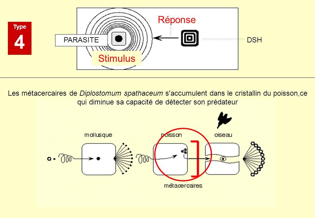 Type 4 Stimulus Réponse PARASITE DSH Les métacercaires de Diplostomum spathaceum s'accumulent dans le cristallin du poisson,ce qui diminue sa capacité