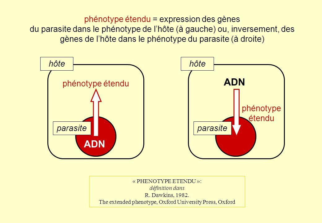 ADN phénotype étendu hôte parasite phénotype étendu = expression des gènes du parasite dans le phénotype de lhôte (à gauche) ou, inversement, des gène