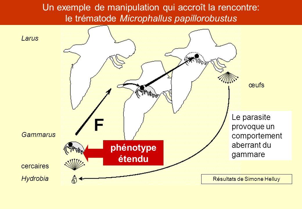 Un exemple de manipulation qui accroît la rencontre: le trématode Microphallus papillorobustus œufs cercaires Hydrobia Gammarus Larus Résultats de Sim