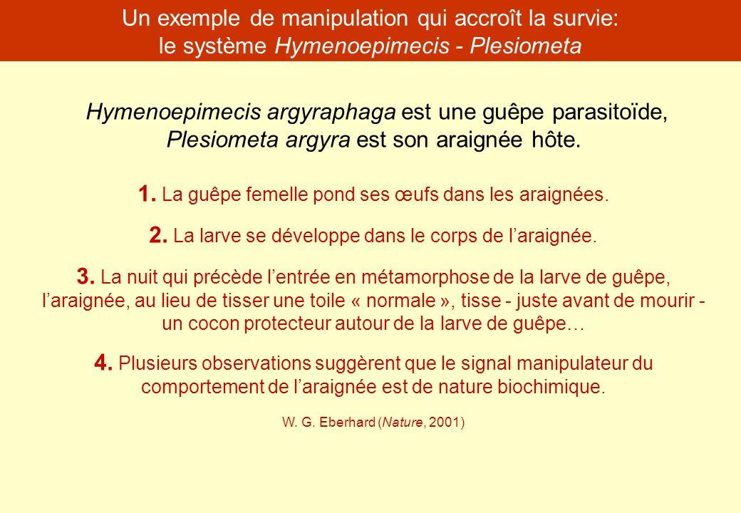 Hymenoepimecis argyraphaga est une guêpe parasitoïde, Plesiometa argyra est son araignée hôte. 1. La guêpe femelle pond ses œufs dans les araignées. 2