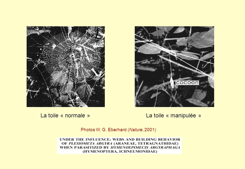La toile « normale »La toile « manipulée » Photos W. G. Eberhard (Nature, 2001)