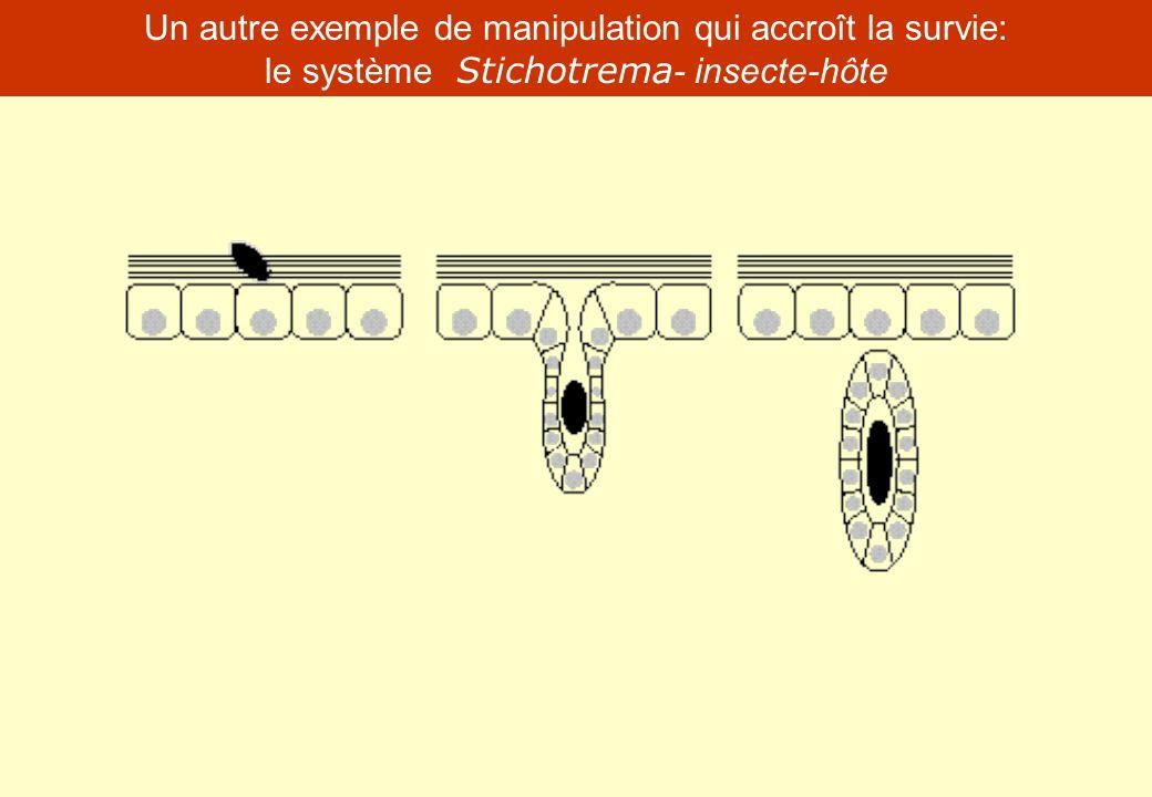 Un autre exemple de manipulation qui accroît la survie: le système Stichotrema - insecte-hôte