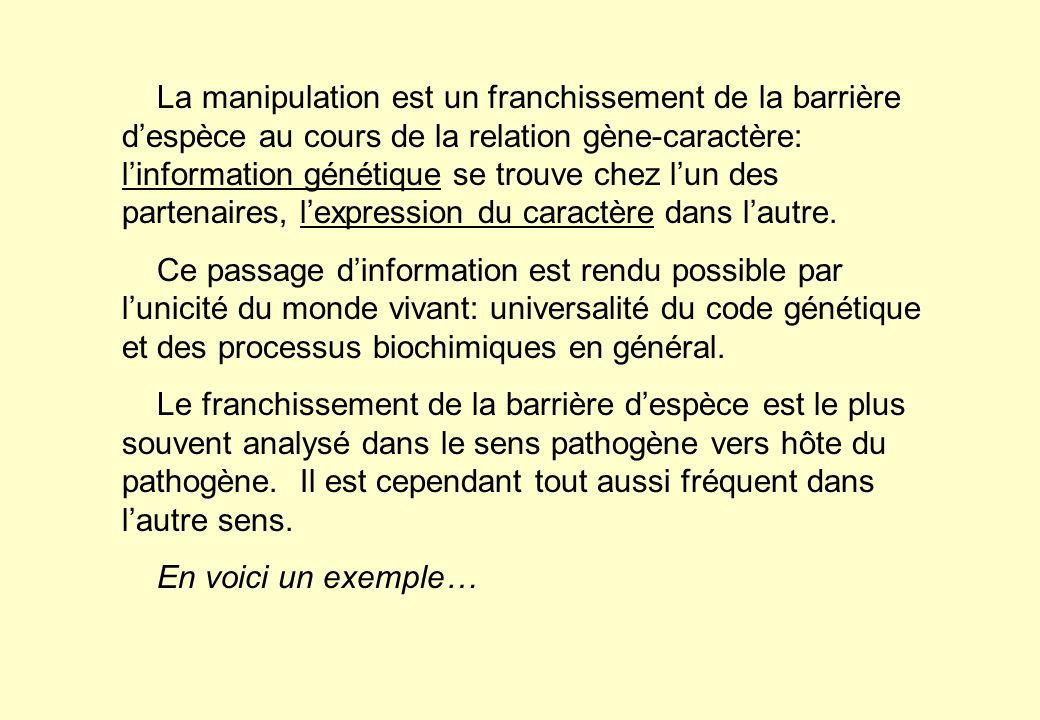 La manipulation est un franchissement de la barrière despèce au cours de la relation gène-caractère: linformation génétique se trouve chez lun des par