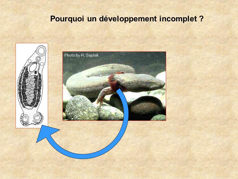 Pourquoi un développement incomplet ?