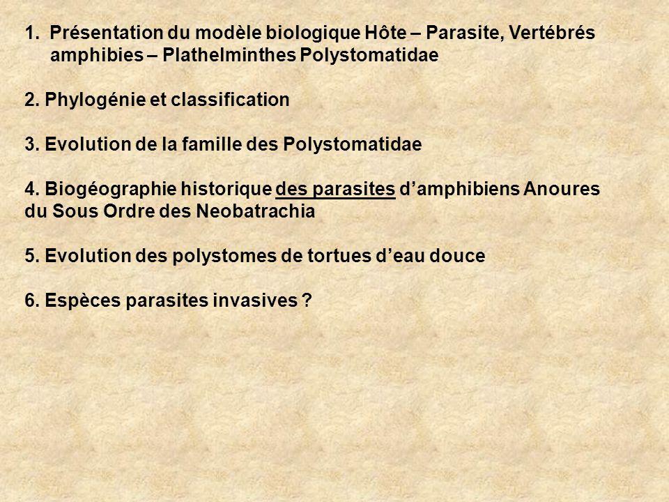 1.Présentation du modèle biologique Hôte – Parasite, Vertébrés amphibies – Plathelminthes Polystomatidae 2. Phylogénie et classification 3. Evolution