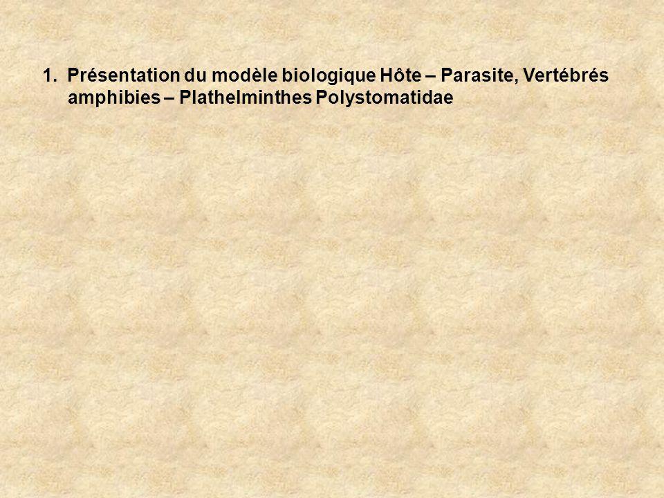 Classe des Monogenea Sous-Classe Polyonchoinea Sous-Classe Heteronchoinea Infra Sous-Classe Oligonchoinea Infra Sous-Classe Polystomatoinea Famille Polystomatidae Genre Diplorchis Eupolystoma Mesopolystoma Metapolystoma Parapolystoma Parapseudopolystoma Polystoma Riojatrema Sundapolystoma Wetapolystoma Neodiplorchis Pseudodiplorchis Protopolystoma Pseudopolystoma Neopolystoma Polystomoides Polystomoidella Oculotrema Concinnocotyla Famille Sphyranuridae Sphyranura Daprès Boeger et Kritsky (2001) Amphibiens anoures urodèle Dipneuste urodèles Tortues deau douce Hippopotame