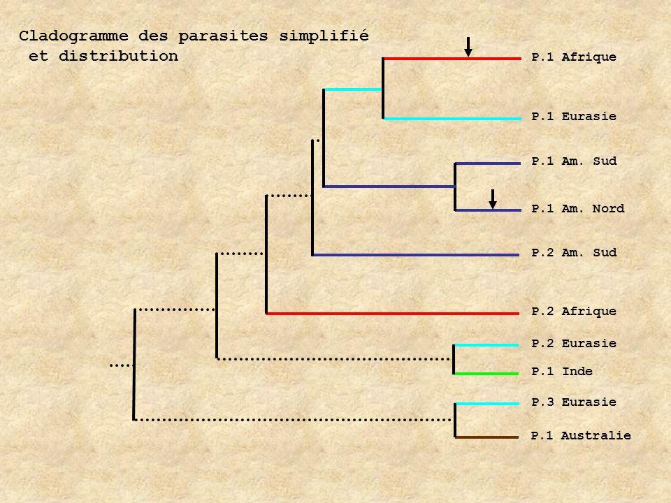 Cladogramme des parasites simplifié et distribution P.1 Afrique P.1 Eurasie P.1 Am. Sud P.2 Am. Sud P.2 Afrique P.2 Eurasie P.1 Inde P.3 Eurasie P.1 A