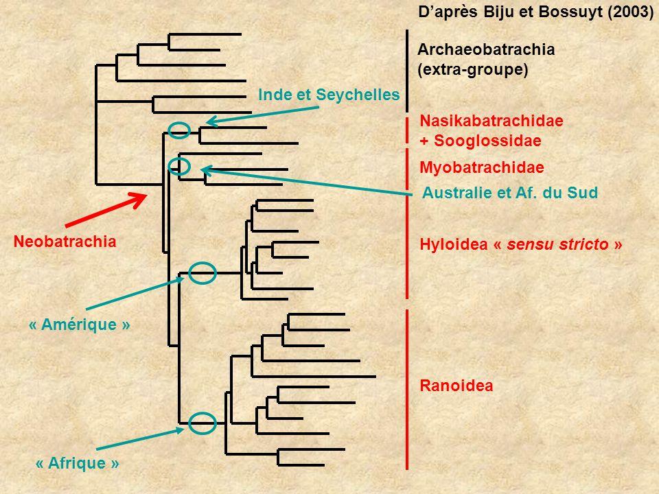 Neobatrachia Archaeobatrachia (extra-groupe) Nasikabatrachidae + Sooglossidae Myobatrachidae Hyloidea « sensu stricto » Ranoidea Inde et Seychelles Au