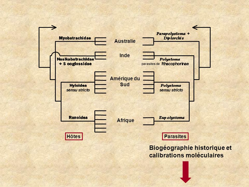Hôtes Parasites Amérique du Sud Inde Australie Afrique parasites de Biogéographie historique et calibrations moléculaires