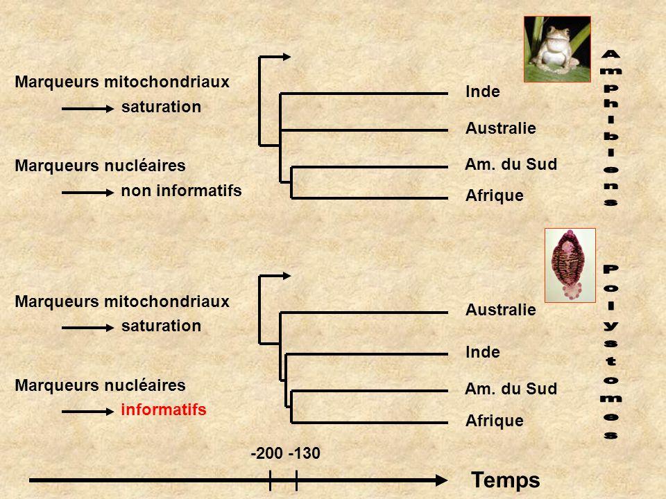 Marqueurs mitochondriaux saturation Marqueurs nucléaires non informatifs Marqueurs mitochondriaux saturation Marqueurs nucléaires informatifs Temps -2