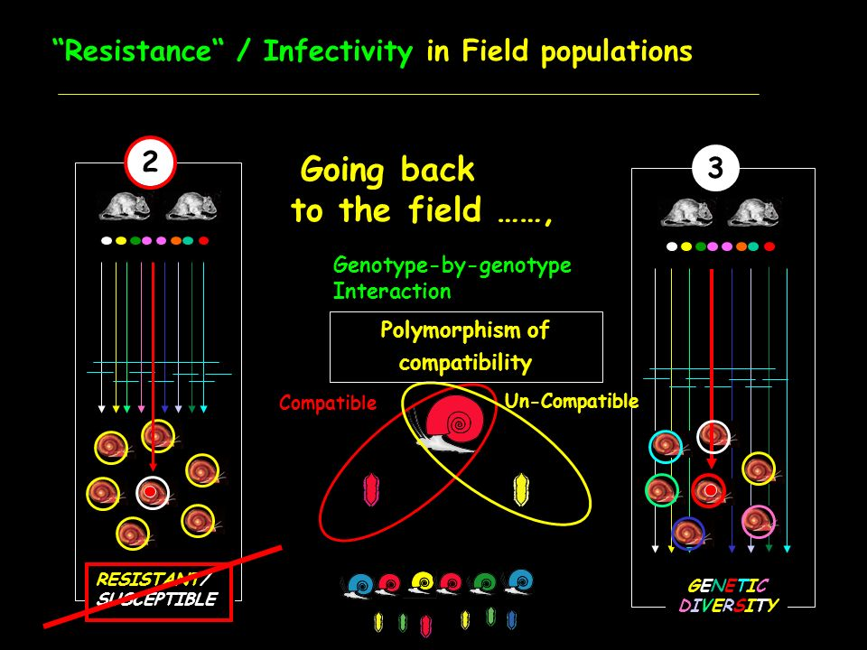 Resistance / Infectivity in Field populations Going back to the field ……, 2 RESISTANT/ SUSCEPTIBLE Genotype-by-genotype Interaction 3 GENETICDIVERSITY