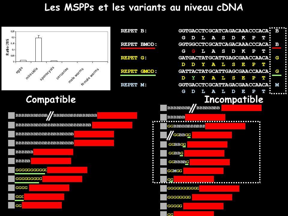 Les MSPPs et les variants au niveau cDNA REPET B:GGTGACCTCGCATCAGACAAACCCACA B G D L A S D K P T REPET BMOD: GGTGGCCTCGCATCAGACAAACCCACA B G G L A S D