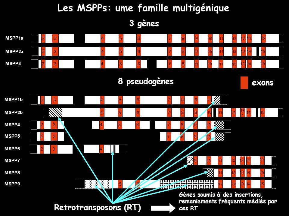 Les MSPPs: ume famille multigénique MSPP1a 3 45678 9 10 1112 13 14 15 2 3456789 1112 13 14 15 MSPP2a 2 10 3456789 1112 13 1415 MSPP3 2 10 3 43 2 MSPP6