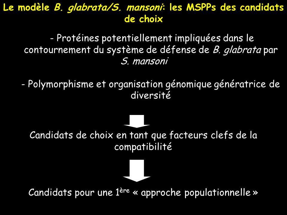 - Protéines potentiellement impliquées dans le contournement du système de défense de B. glabrata par S. mansoni - Polymorphisme et organisation génom