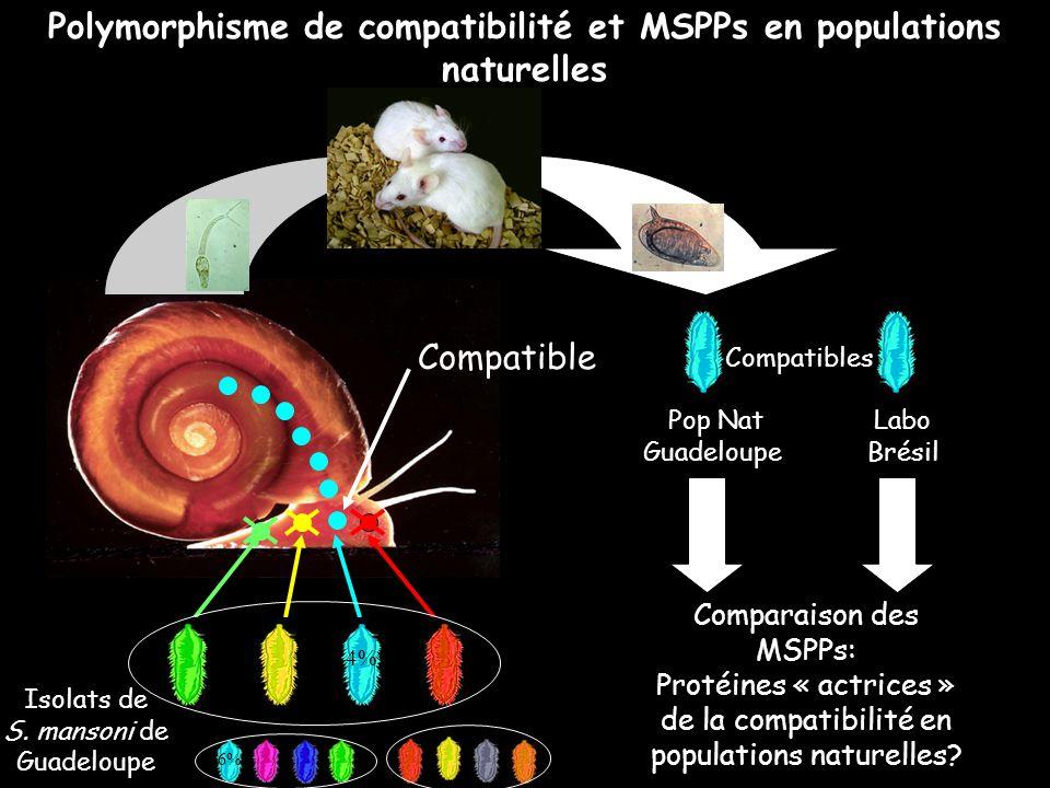 Comparaison des MSPPs: Protéines « actrices » de la compatibilité en populations naturelles? Compatible Compatibles Pop Nat Labo Guadeloupe Brésil Iso