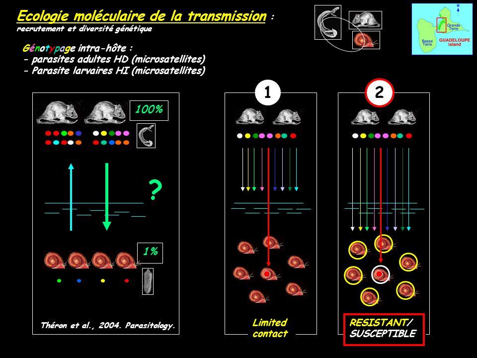 Ecologie moléculaire de la transmission : recrutement et diversité génétique Théron et al., 2004. Parasitology. Génotypage intra-hôte : - parasites ad