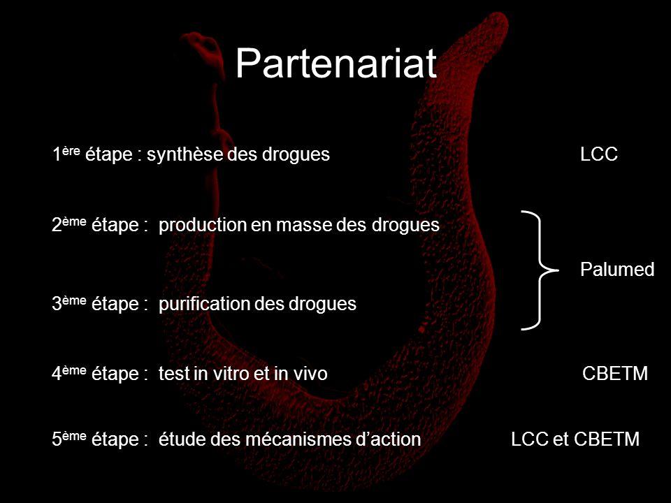 Partenariat 1 ère étape : synthèse des drogues 2 ème étape : production en masse des drogues 3 ème étape : purification des drogues 4 ème étape : test
