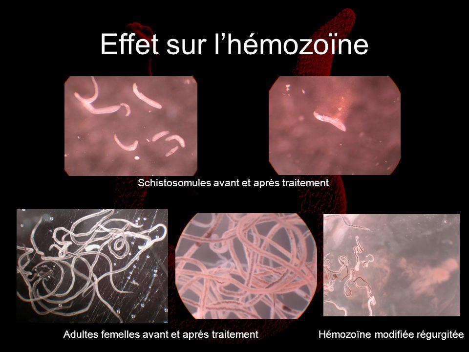 Effet sur lhémozoïne Schistosomules avant et après traitement Adultes femelles avant et après traitementHémozoïne modifiée régurgitée