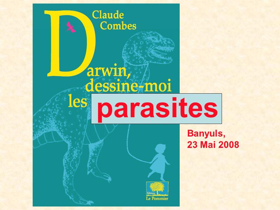L hôte : Segestidea novaeguineae [Orthoptère] Le parasite : Stichotrema dallatorreanum [Strepsiptère] J.