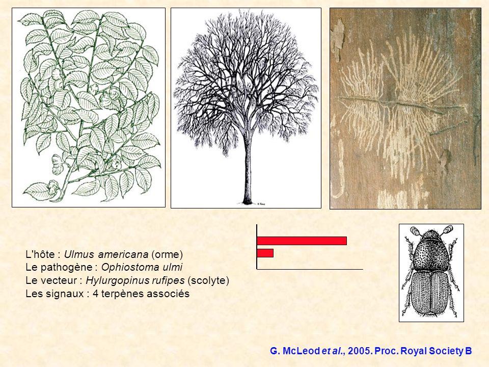 L'hôte : Ulmus americana (orme) Le pathogène : Ophiostoma ulmi Le vecteur : Hylurgopinus rufipes (scolyte) Les signaux : 4 terpènes associés G. McLeod