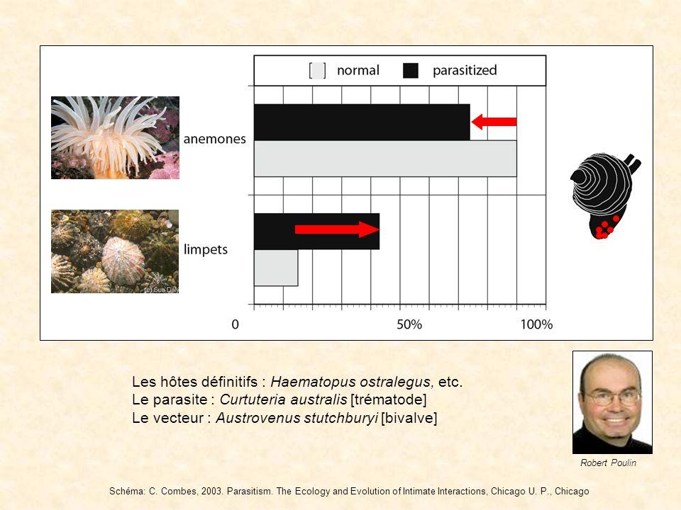 Robert Poulin Les hôtes définitifs : Haematopus ostralegus, etc. Le parasite : Curtuteria australis [trématode] Le vecteur : Austrovenus stutchburyi [